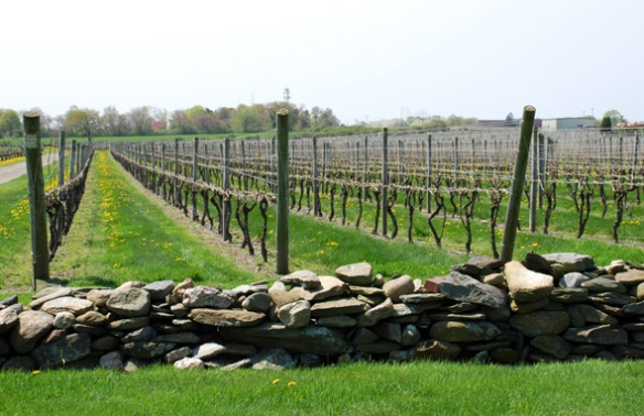 newport-vineyard-590x382