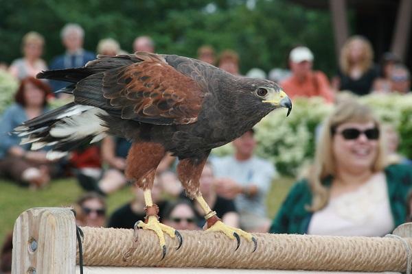 newport-bird-festival